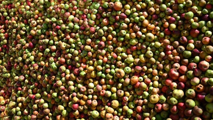 Apfelernte in Hessen