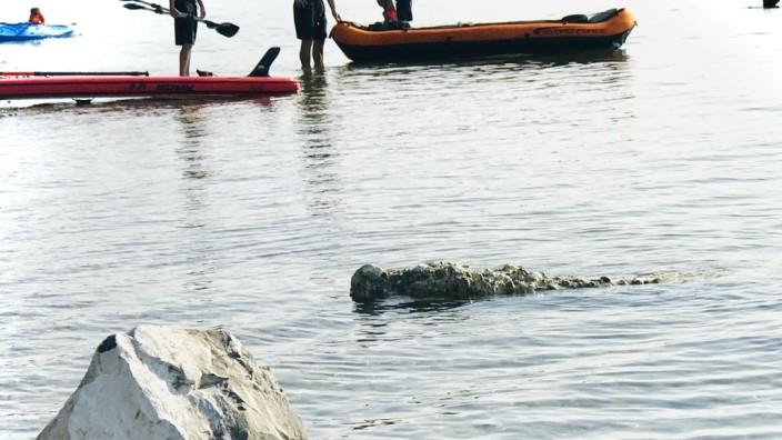 Schnappschuss: Sieht aus wie ein Krokodil: Dieser Schni-schna-Schnappschuss gelang Andreas Baar vor Wartaweil.