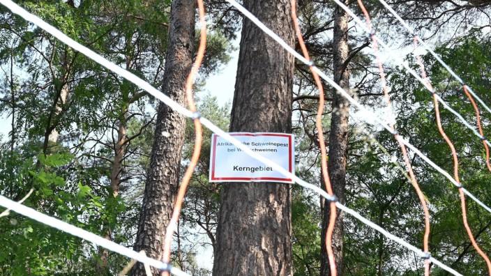 Zaun gegen Schweinpest-Ausbreitung