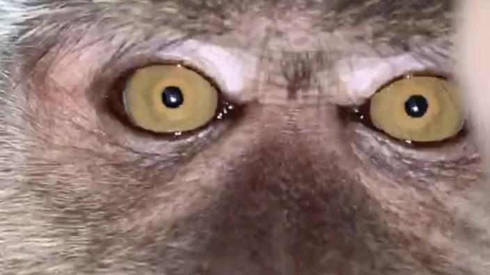 Affen-Selfie: Primat klaut in Malaysia Smartphone und macht Fotos
