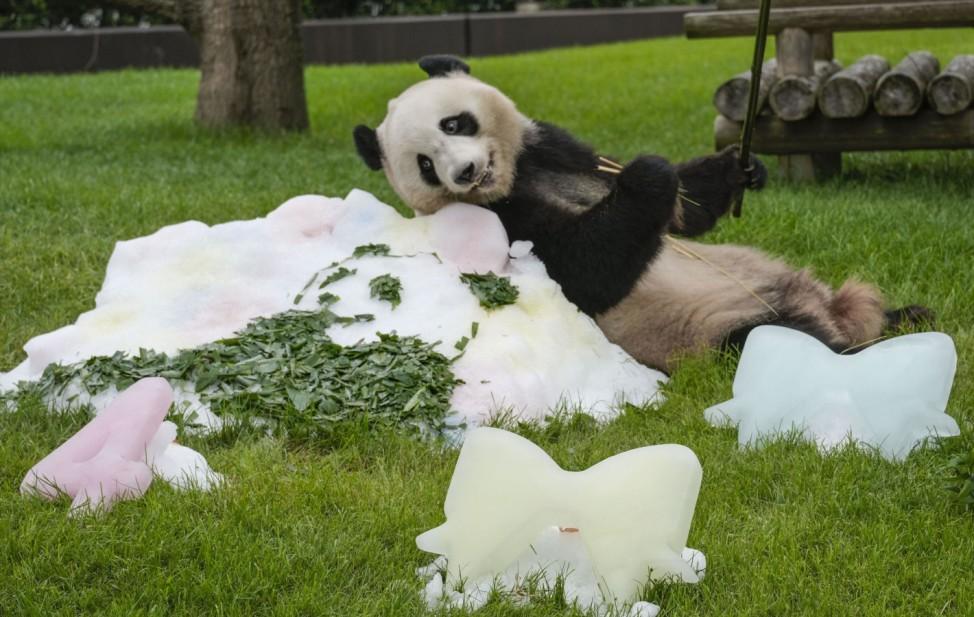 Großer Panda im Zoo von West-Japan