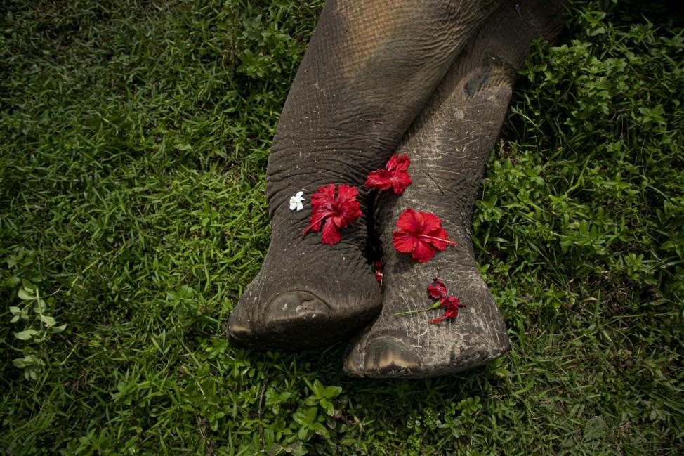 Begräbnis für Elefanten in Indien