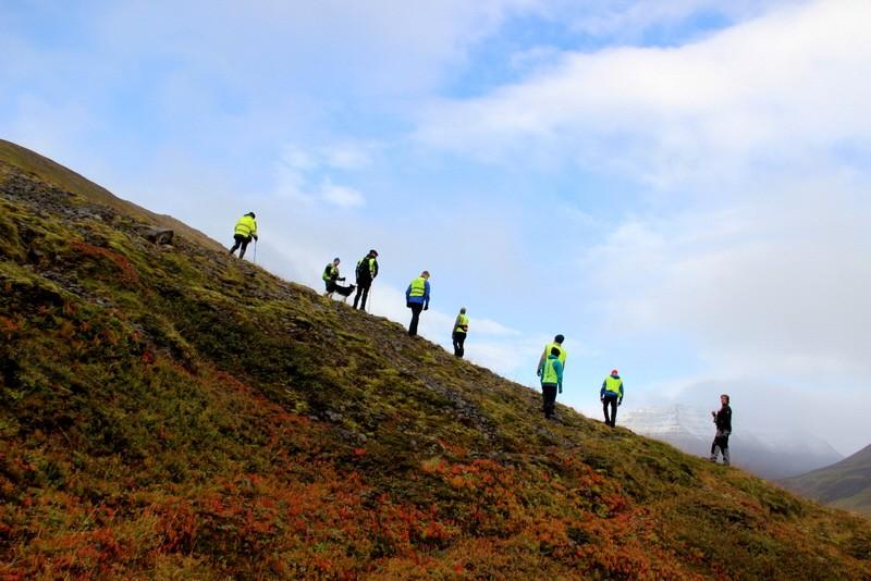 Island Schafabtrieb Tradition Schafe Abtrieb Herbst Reise Iceland