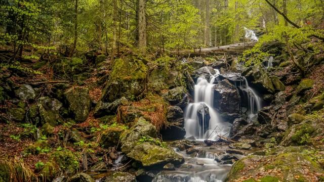 Bayerische Wald bildextern:20200717 höllbachgespreng steffen_krieger (36).jpg
