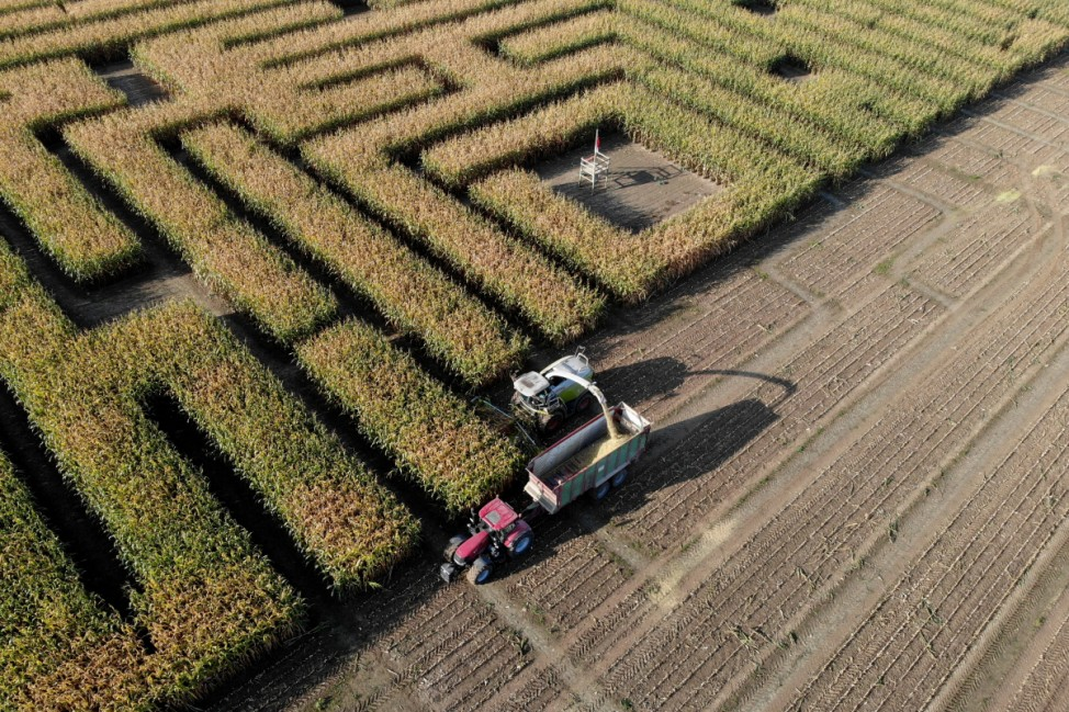 Maislabyrinth in Niedersachsen