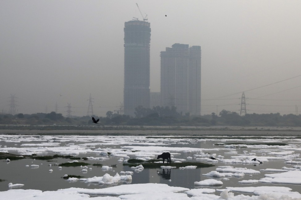 An animal is seen grazing in the polluted water of the river Yamuna, covered in foam during a hazy morning, in New Delhi
