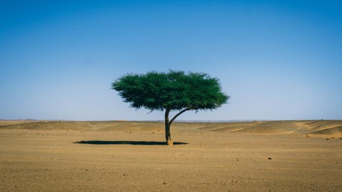 Umwelt: Schattenspender, Feuchtigkeitsspeicher, Erosionsschutz: ein Baum in der Sahara.