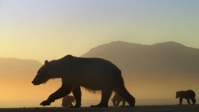 Der Bär in mir Doku