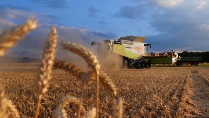 Ernte der Feldfrucht Weizen auf einem Feld in Abbenrode im Landkreis-Harz im Bundesland Sachsen-Anhalt. Getreideernte **