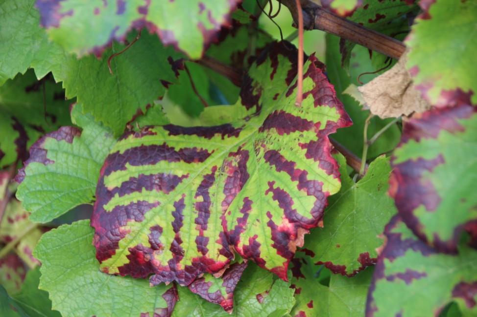 Herbstfoto_Hinsch