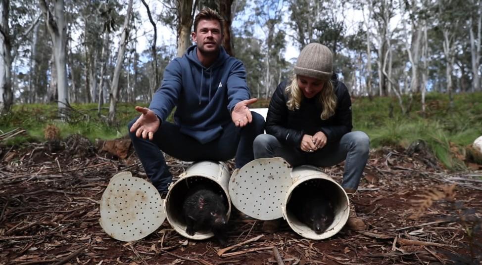 Auswilderung Tasmanischer Teufel in Australien