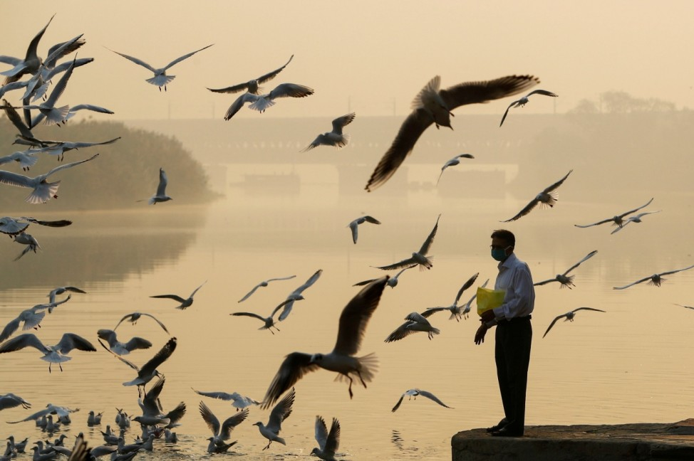 A man feeds seagulls as he stands on the banks of Yamuna river, on a smoggy morning in New Delhi