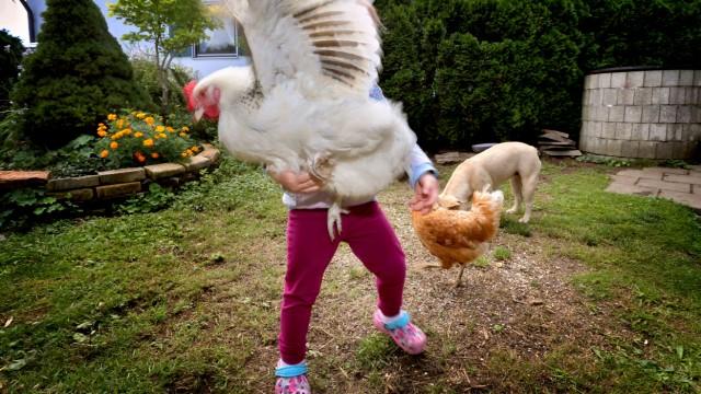 Hühnerhaltung als Hobby in Corona-Zeiten