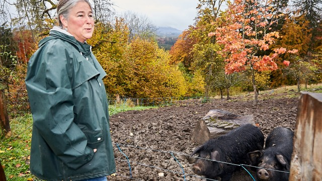 Bergschweine Hechenberg