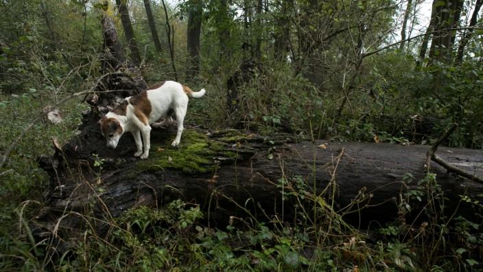 Vertragsnaturschutz im Wald, Kirchheim, am Abfanggraben