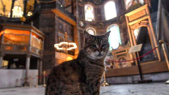 Katze in der Hagia Sophia Tierschutz Türkei