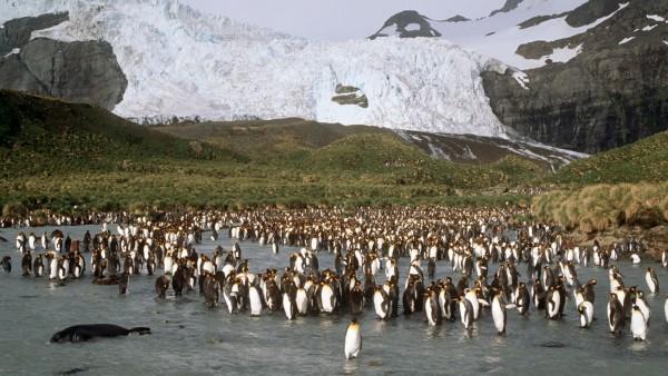 Eisberg auf Kollisionskurs mit Insel - Pinguine in Gefahr