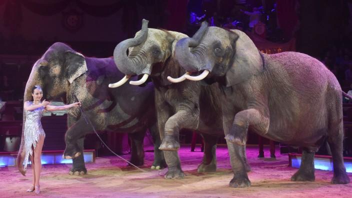 Elefanten von Circus Krone
