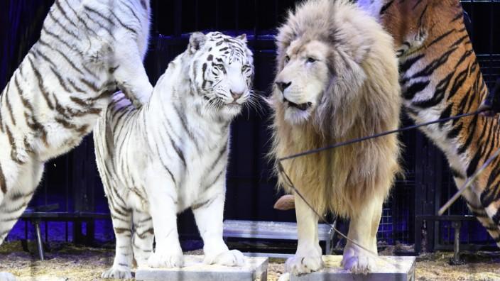 Martin Lacey Jr. beim Circus Krone in München, 2019