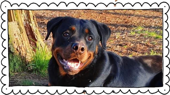 Rottweiler Magnus - zu lieb für die Polizei