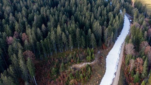 Weißes Band im grünen Wald: Die Snowfarming-Loipe in Seefeld wird aus altem Schnee gebaut.