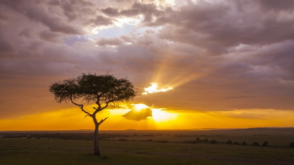 Silhouette of acacia tree at sunset, Masai Mara National Reserve, Kenya. (Christina Krutz)