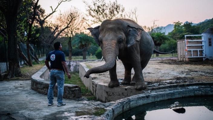 Pakistan: Elefant Kaavan in seinem ehemaligen Gehege in Islamabad
