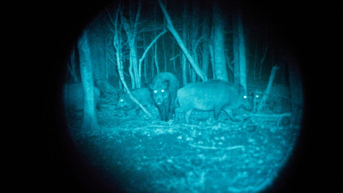 Wildschweinjagd mit Nachtsichgerät