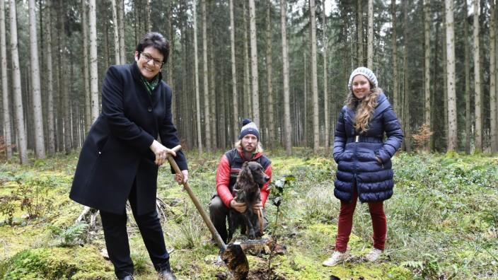 Buchendorf Wald Ökokonto Umsetzung