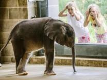 Österreich: Babyelefant ist Wort des Jahres