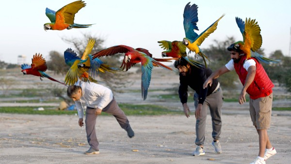 (201209) -- BEIJING, Dec. 9, 2020 -- People train parrots during a parrot-training show held by Kuwaiti bird lovers in J