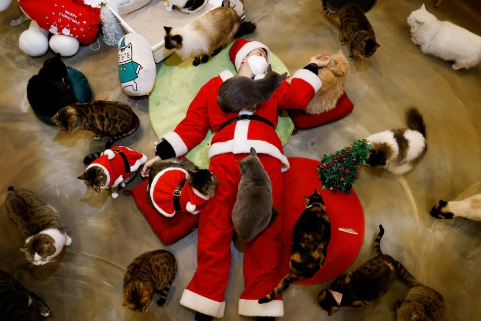 An employee dressed in a Santa Claus costume plays with cats at the Catgarden in Seoul
