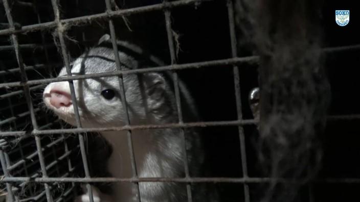 Nerze Video, Soko Tierschutz