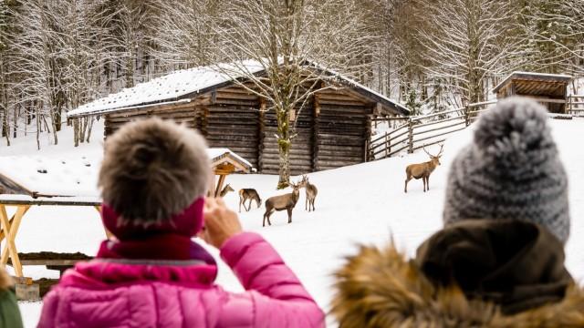 Wildfuetterung im Klausbachtal/ Ramsau/ Nationalpark Berchtesgaden/ Berchtesgadener Land