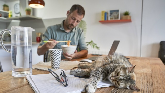 Cat lying on book while businessman eating noodles when working at home model released Symbolfoto property released VEGF