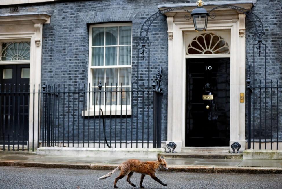 Fox walks outside Downing Street in London