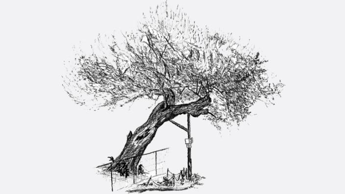 Bäume in der Stadt: Ein alter Maulbeerbaum, den die Autorin Caroline Ring gezeichnet hat.