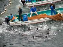 Tierschützer gegen Delfinjäger: Japans Free Willy