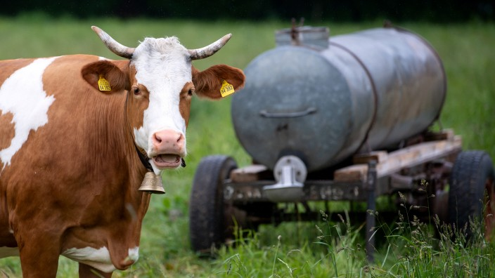 Zahl der Rinderhaltungen in Bayern weiter gesunken