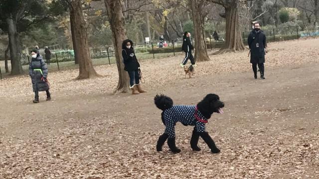 Dog-Run im Yoyogi-Park in Shibuya, Tokio
