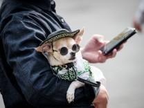 Hunde in Japan: Lass mich frei!