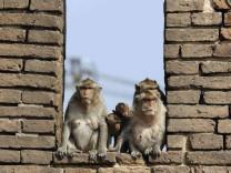Biologie: Kapitalismus der Affen