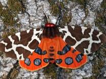 Artensterben: Warum die Insekten sterben