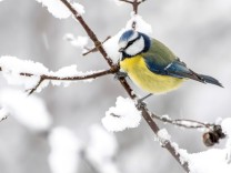 Klimakolumne: Her mit dem Schnee