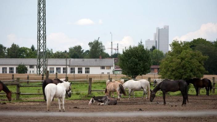 Pferdekoppel bei Daglfing, 2012
