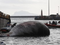 Italien, im Golf von Neapel wird ein Wal-Kadaver geborgen The recovery by the coast guard of the carcass of the whale fo