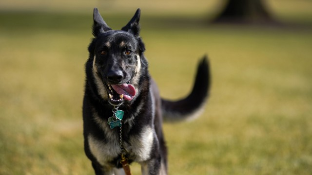 """Wieder Hunde im Weißen Haus: ´Champ"""" und ´Major"""""""