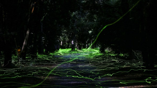 Fireflies light up inside a forest at Pitrufquen area, Temuco