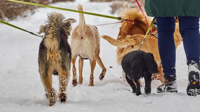 Hunde im Ebersberger Forst
