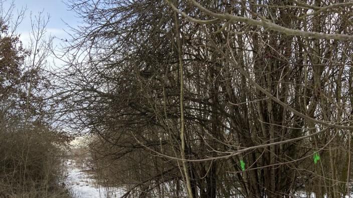 Kirchheim: Die markierten Bäume sollen stehen bleiben.
